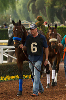 ARCADIA, CA  JANUARY 06: #6 McKinzie in the paddock before the Sham Stakes (Grade lll) on January 6, 2018, at Santa Anita Park in Arcadia, CA.  (Photo by Casey Phillips/ Eclipse Sportswire/ Getty Images)
