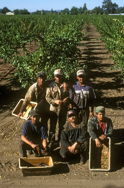 Hispanic men pose for photo after harvest in Napa Valley