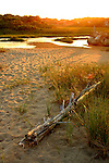 The golden glistering reflection of early morning  sun in  the marshes of Cape Cod ,Massachusetts.
