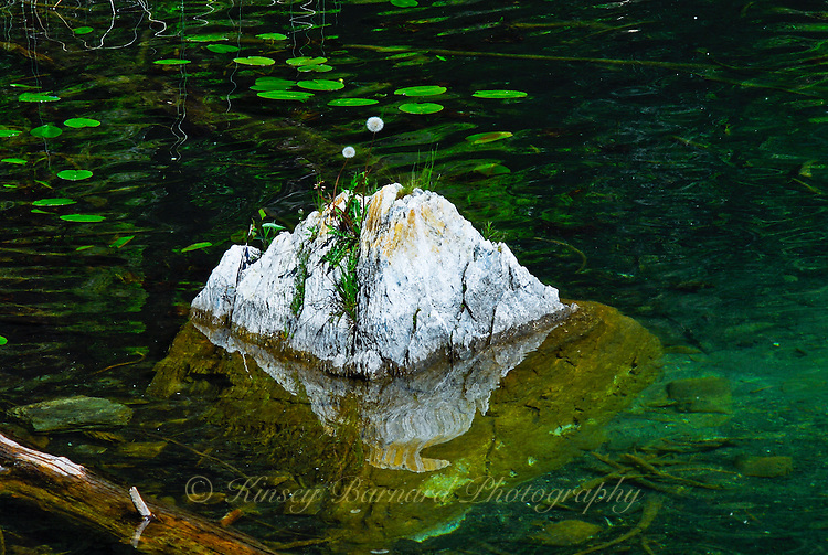 """GONE TO SEED""<br />