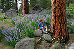 Charlie Marshall, age 5 in patch of lupine in Icicle Canyon near Leavenworth, WA..Ponderosa pine tree.  Wenatchee National Forest, Washington State.