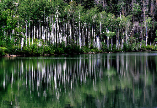 Summer aspens are reflected off the waters of Kolob Reservoir near Zion National Park, Utah