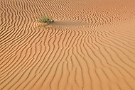 Desert sand in United Arab Emirates