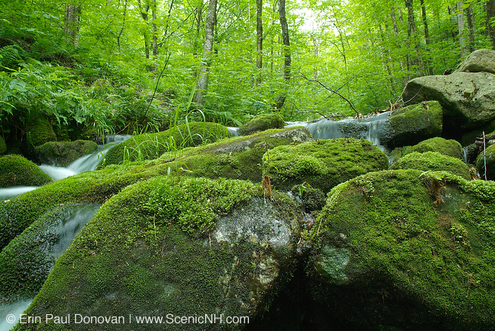 Skookumchuck Brook during the early summer months which runs on the side of Skookumchuck Trail in the White Mountains, New Hampshire  USA. .