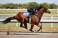 #149Fasig-Tipton Florida Sale,Under Tack Show. Palm Meadows Florida 03-23-2012 Arron Haggart/Eclipse Sportswire.