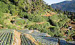 Terraces of vegetable crops near the town of Nuwara Eliya, Central Province, Sri Lanka