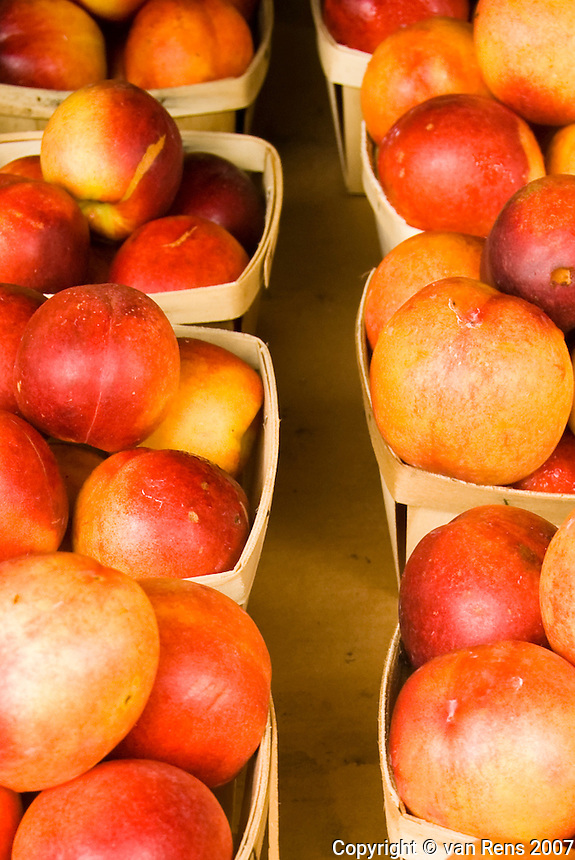 Nectarine is a cultivar group of peach that has a smooth, fuzzless skin in Midwestern Farm Market