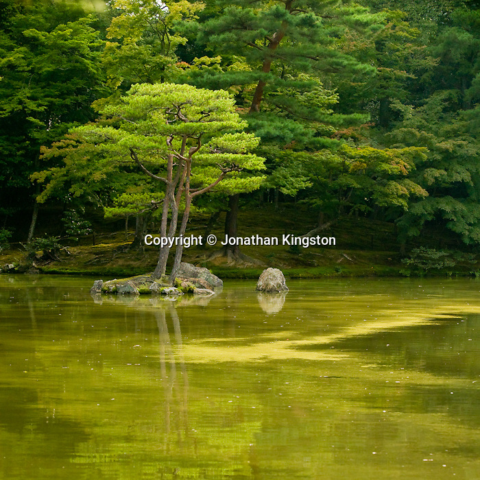 Tree, reflection and lake on the grounds of the Golden Pavilion Temple, Kyoto, Japan.