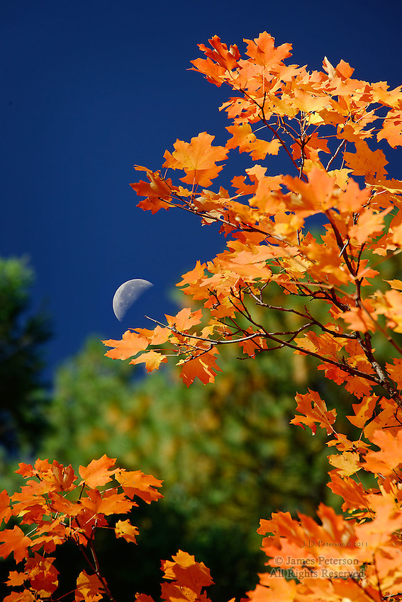 Maples with Half Moon, West Fork of Oak Creek, Arizona