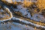 Rare winter desert snowfall on fallen Joshua Tree, Joshua Tree National Park, California