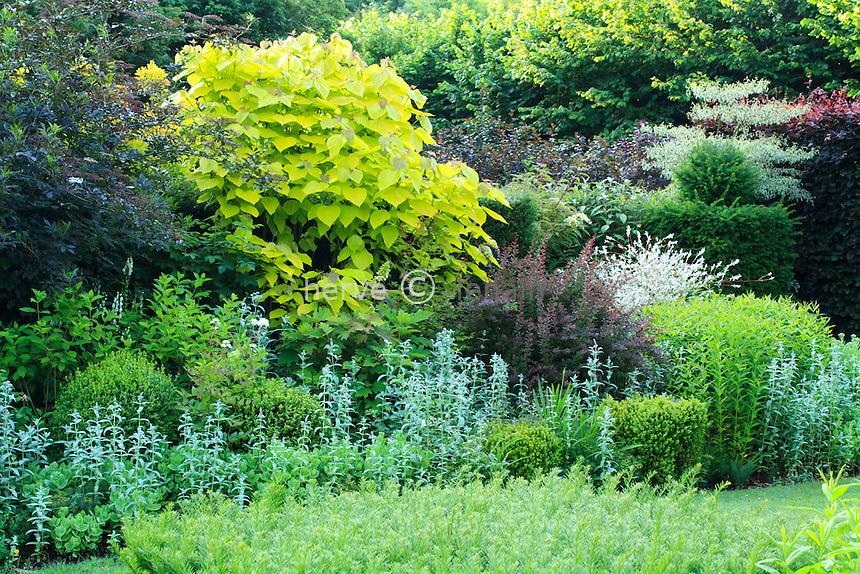 Jardins du pays d'Auge (mention obligatoire dans la légende ou le crédit photo):.massif contrasté pourpre/doré avec de gauche à droite sureau noir à feuilles pourpres, Catalpa bignonioides 'Aurea', Berberis thunbergii 'Purpurea', saule crevette (Salix integra 'Hakuro Nishiki', if taillé, haie de hêtres pourpres...