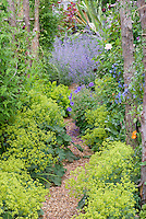 Gravel path with Alchemilla mollis in garden use