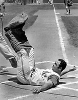 Oakland Athletics Captain Sal Bando falls a home plate after pre-game sack race with players.(1971 photo/Ron Riesterer)