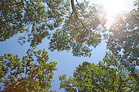 FOREST_LOCATION_90097