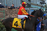 January 18, 2016: #4 Toews On Ice before the running of the Smarty Jones Stakes at Oaklawn Park in Hot Springs, AR. Justin Manning/ESW/CSM