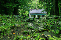 White House in the Green Forest