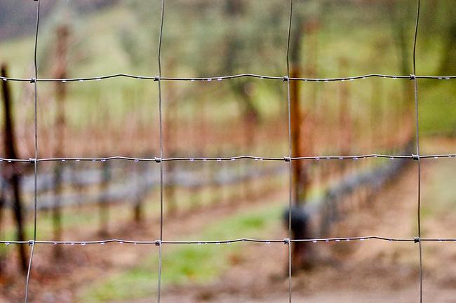 Rain drops on fence in Napa Valley vineyard