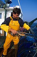 """Europe/France/Bretagne/29/Finistère/Le Conquet: Pêche au homard sur le """"Louarn Ar Mor"""" avec Alain Le Bras [AUTORISATION N°265]"""