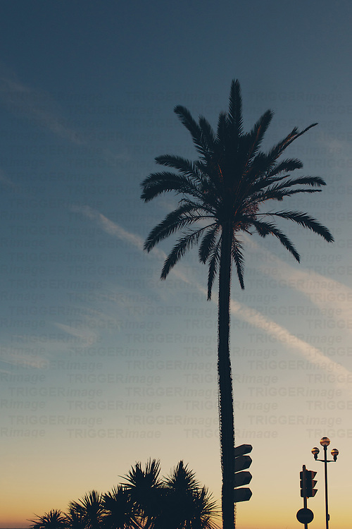 A palm tree silhouetted against the setting sun.