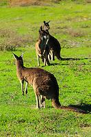 Western Australia X OTHER