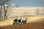 Nippenose Valley, PA. Amishman plowing with 4 mule team in early March.