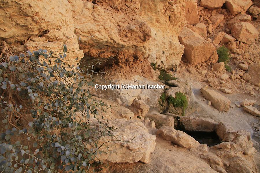 Israel, Ein Netafim the only spring in Eilat mountains