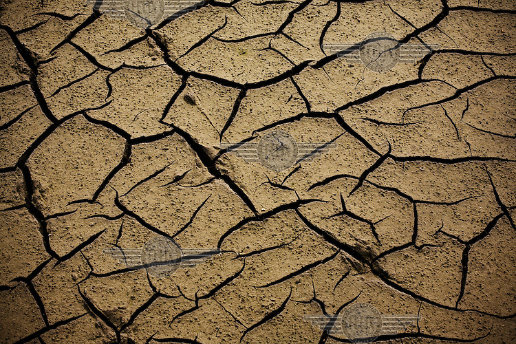 A parched ricefield before the sowing season, in the Ebro Delta.