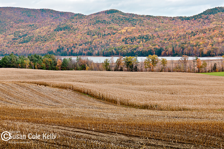 Fall foliage in Bristol, VT, USA