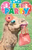 Samantha, ANIMALS,  photos,+camel,++++,AUKPLP093,#A# Humor, lustig, divertido