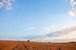 Europa, DEU, Deutschland, Nordrhein Westfalen, NRW, Rheinland, Niederrhein, Toenisberg, Schaephuysener Hoehen, Agrarlandschaft, Getreideanbau, Sommer, Abendstimmung, Himmel, Wolken, Kategorien und Themen, Natur, Umwelt, Landschaft, Jahreszeiten, Stimmungen, Landschaftsfotografie, Landschaften, Landschaftsphoto, Landschaftsphotographie, Wetter, Himmel, Wolken, Wolkenkunde, Wetterbeobachtung, Wetterelemente, Wetterlage, Wetterkunde, Witterung, Witterungsbedingungen, Wettererscheinungen, Meteorologie, Bauernregeln, Wettervorhersage, Wolkenfotografie, Wetterphaenomene, Wolkenklassifikation, Wolkenbilder, Wolkenfoto....[Fuer die Nutzung gelten die jeweils gueltigen Allgemeinen Liefer-und Geschaeftsbedingungen. Nutzung nur gegen Verwendungsmeldung und Nachweis. Download der AGB unter http://www.image-box.com oder werden auf Anfrage zugesendet. Freigabe ist vorher erforderlich. Jede Nutzung des Fotos ist honorarpflichtig gemaess derzeit gueltiger MFM Liste - Kontakt, Uwe Schmid-Fotografie, Duisburg, Tel. (+49).2065.677997, ..archiv@image-box.com, www.image-box.com]