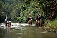 Trainers bathe the elephants at  Mae Sa Elephant Camp, Chaing Mai, Thailand
