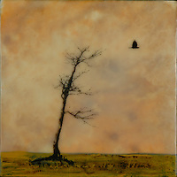 As the crow flies... encaustic painting with photography