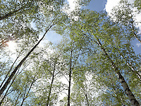 FOREST_LOCATION_90024