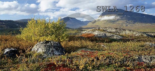 Carl, LANDSCAPES, panoramic, photos, autumn landscape(SWLA1268,#L#)