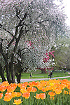 Spring blossoms in the Boston Public Garden, MA