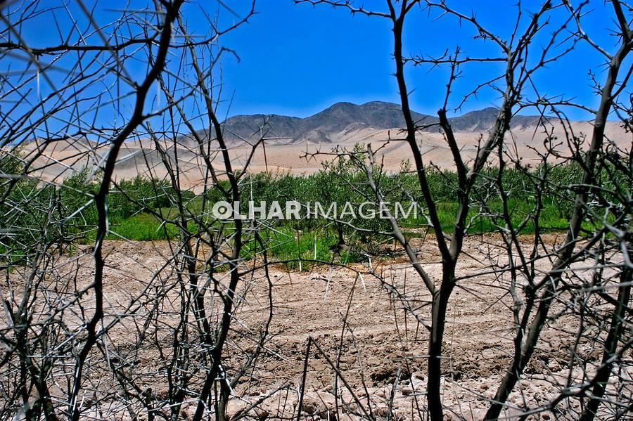 Oásis no deserto. Chile. 2004. Foto de Maristela Colucci.