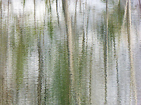&quot;MADISON RIVER REFLECTIONS&quot;<br />