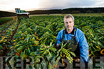 Paudie Hannafin harvesting Brussels Sprouts in Listellick.