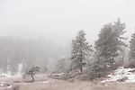 Winter morning near Estes Park, Colorado, USA