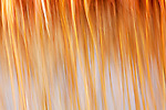 Abstract of river reeds with blue water