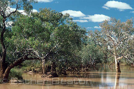 Paroo River, Channel Country, Queensland.