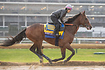 November 1, 2018: West Coast, trained by Bob Baffert, exercises in preparation for the Breeders' Cup Classic at Churchill Downs on November 1, 2018 in Louisville, Kentucky. Jamey Price/Eclipse Sportswire/CSM