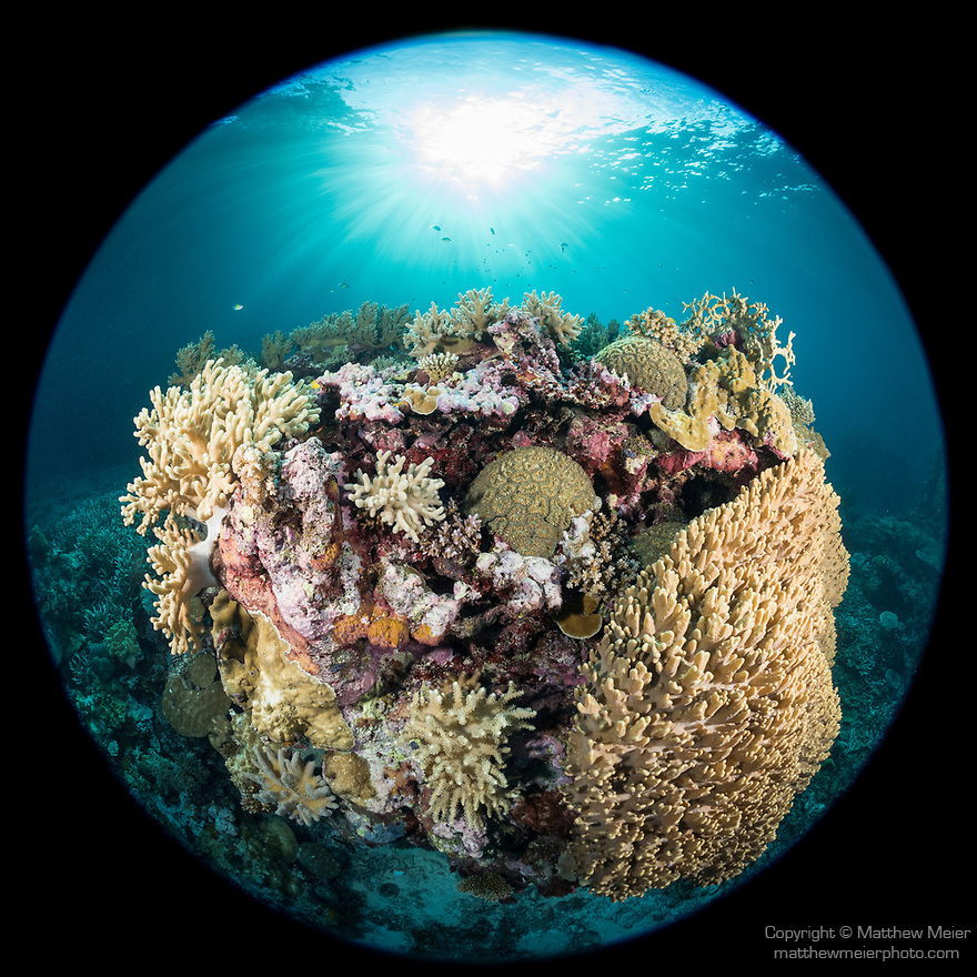 Russell Islands, Solomon Islands; a circular view of a colorful coral bommie with the sun overhead