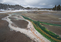 This bright green thermophilic algae is only found in Norris Geyser Basin in winter, when the water temperature is just right.