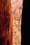 A sunlit tree is centrally placed between the dark walls of a narrow gorge, Northern Territory, Australia.