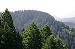 Muir Woods from Mt. Tamalpais