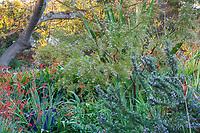 Rosemary with Grevillea sericea and Crocosmia 'Lucifer Nan Sterman Garden