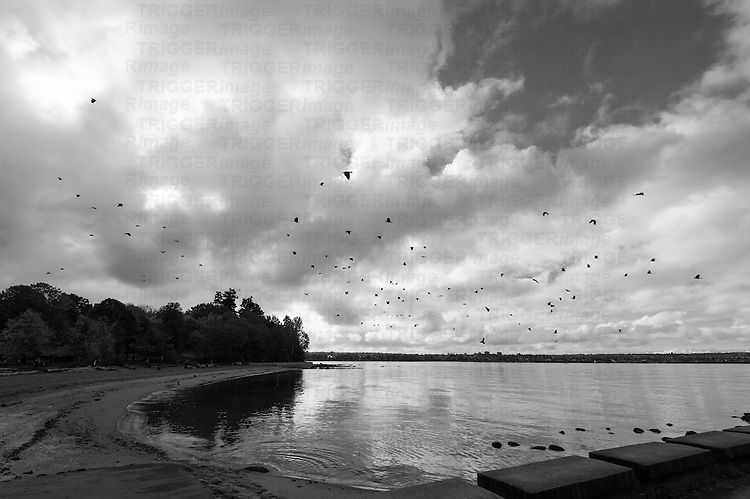A murder of crows flying over and ocean and beach, through stormy skies.