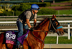 October 26, 2019 : Breeders' Cup Juvenile Turf Sprint entrant Fair Maiden, trained by Eoin G. Harty, exercises in preparation for the Breeders' Cup World Championships at Santa Anita Park in Arcadia, California on October 26, 2019. Scott Serio/Eclipse Sportswire/Breeders' Cup/CSM