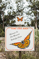 Butterfly Grove, Pismo Beach, California.